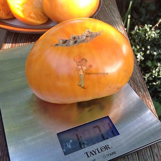 Tomato Barnes Mountain Orange