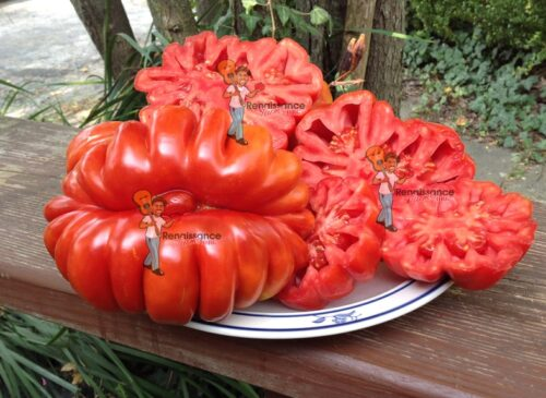 Ruffled Tomatoes