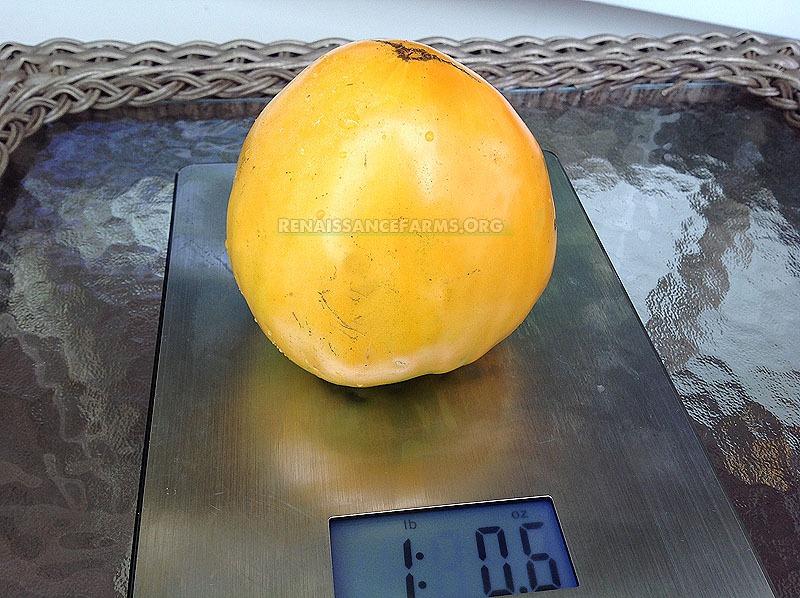 Tomato Heart Of Ashgabat