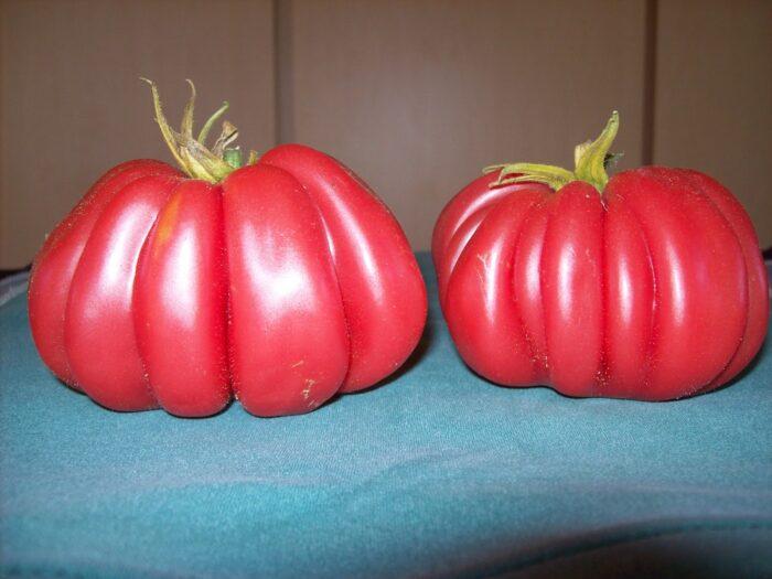 Zapotec Tomato 4