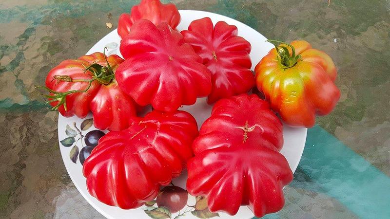Zapotec Tomato Seeds