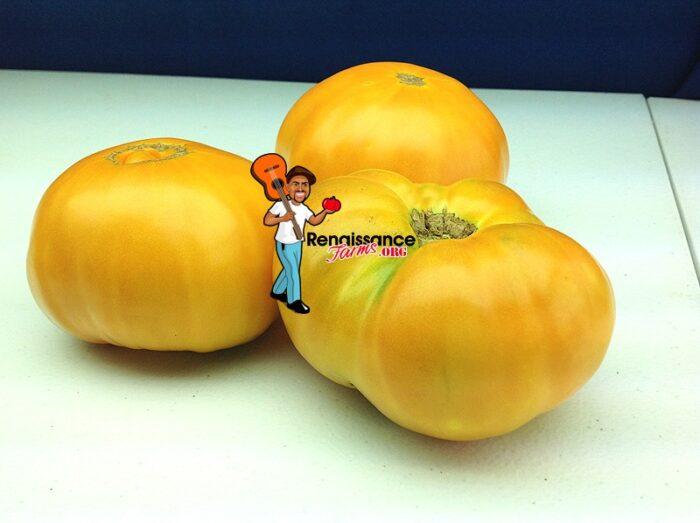 Amana Orange Tomato 2