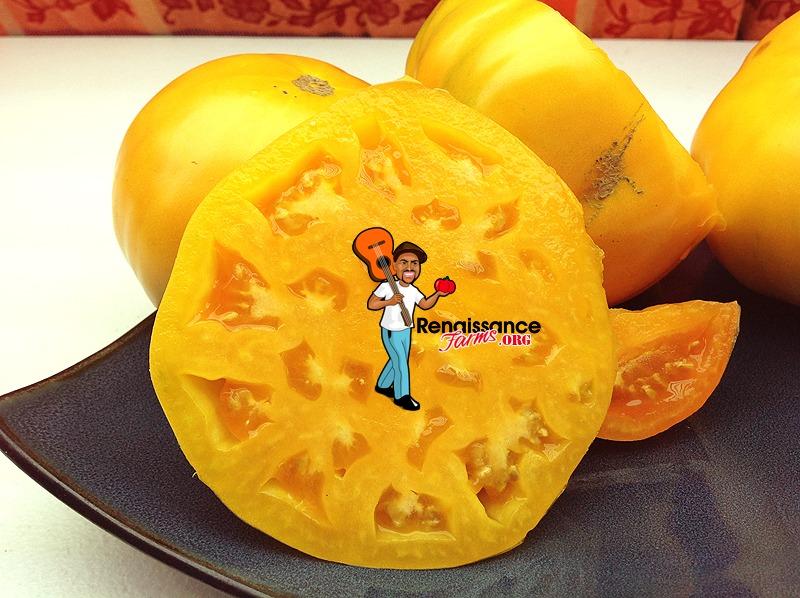 Amana Orange Tomato 2019