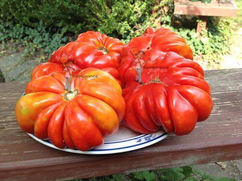 Sauce Tomato