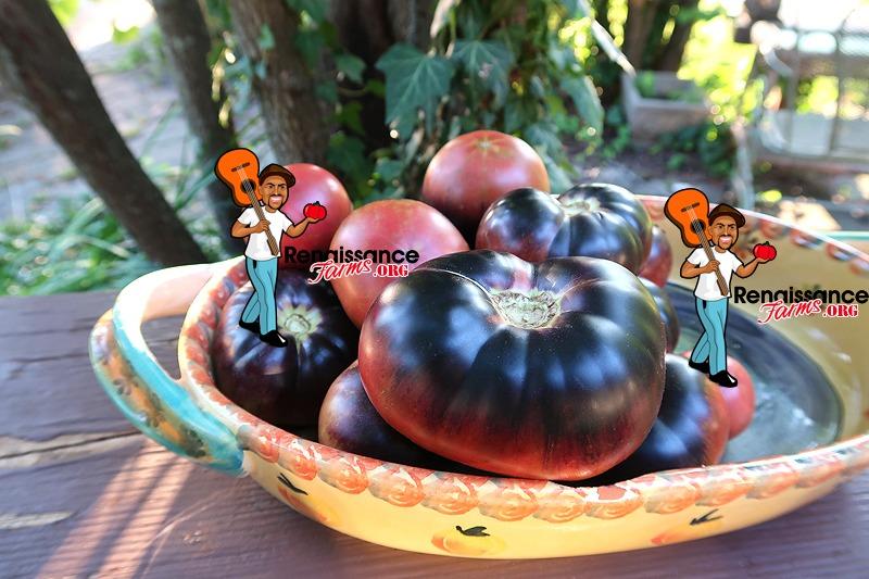 Black Beauty Tomato In Dish