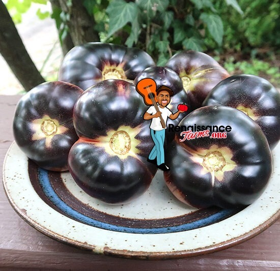 Black Beauty Tomato Images