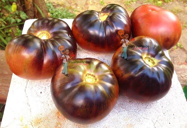 Black Beauty Tomato Seeds