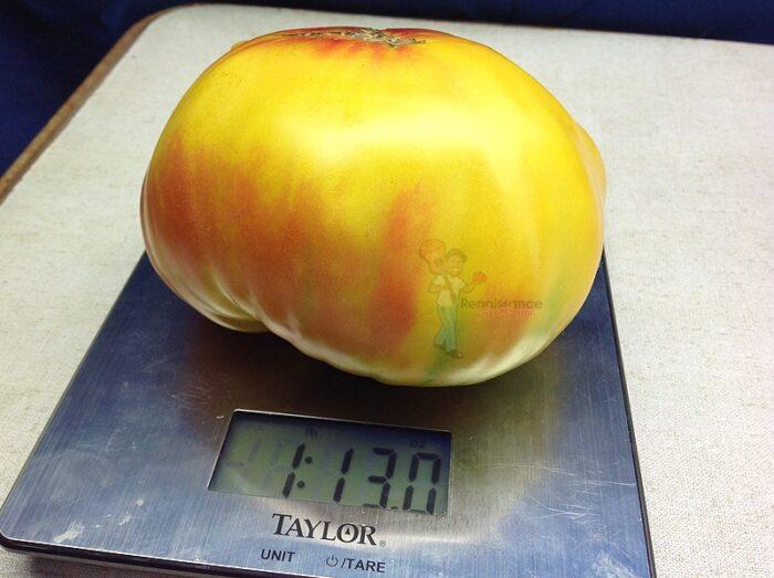 Burracker's Favorite Tomato