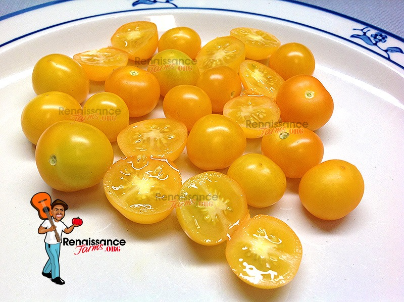 Delicious Aztek Micro Dwarf Tomato 2