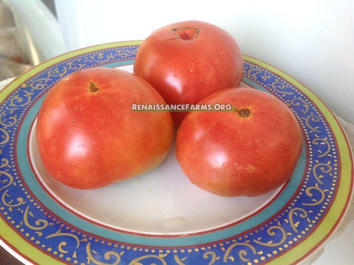 Dwarf Artic Rose Tomato Pictures