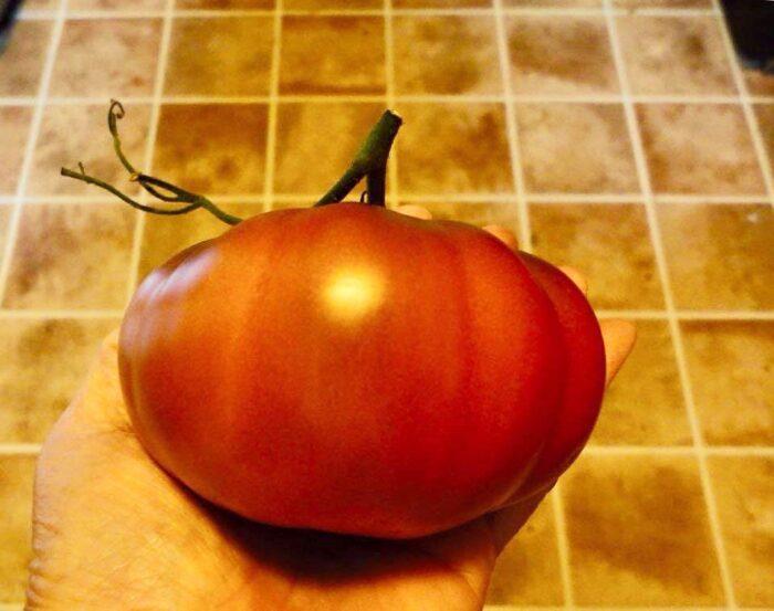 Dwarf Tomato Rosella Purple