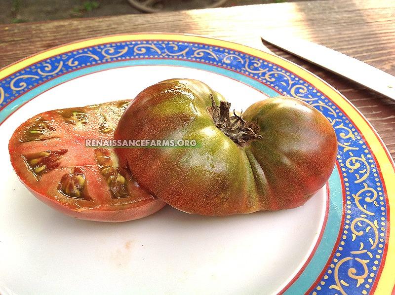 Dwarf Wild Fred Tomato