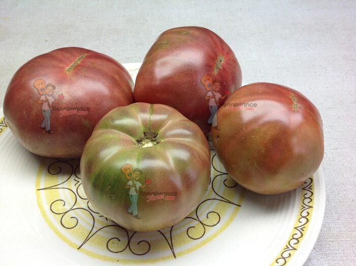Dwarf Wild Spudleaf Tomato