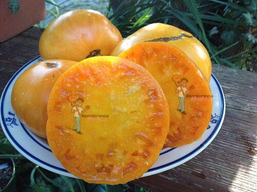 Flathead Monster Tomato