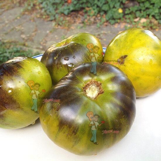 Great Blue Tomato