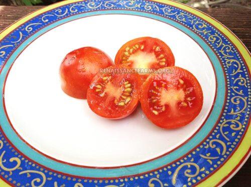 Iditarod Red Dwarf Tomato