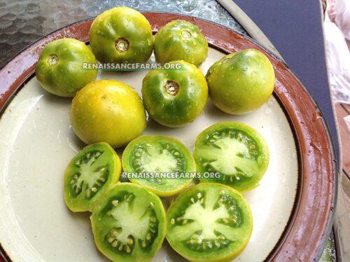 Kangaroo Paw Green Dwarf Tomato