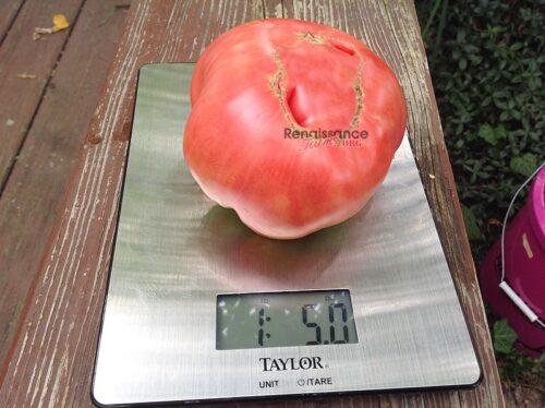 Lithuanian-Tomato