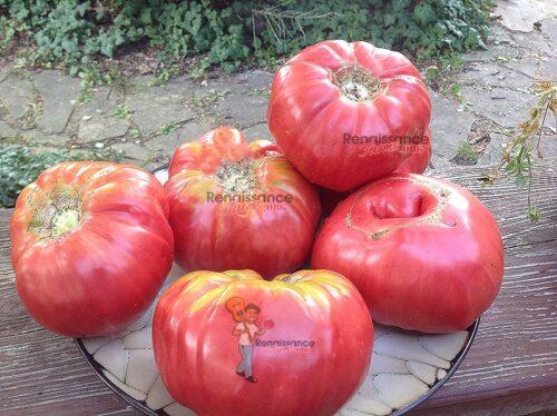Mama Irene's Tomato