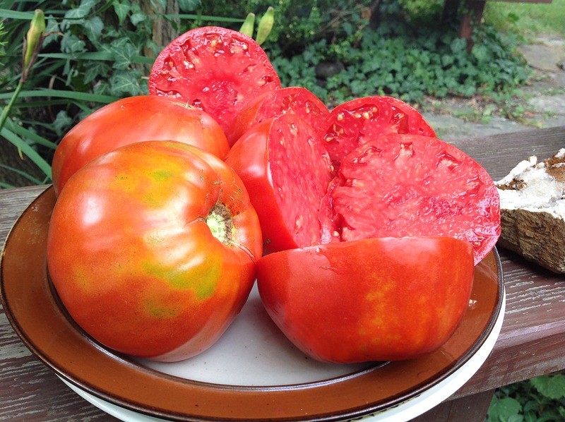 Mayo's Delight Tomato Picture