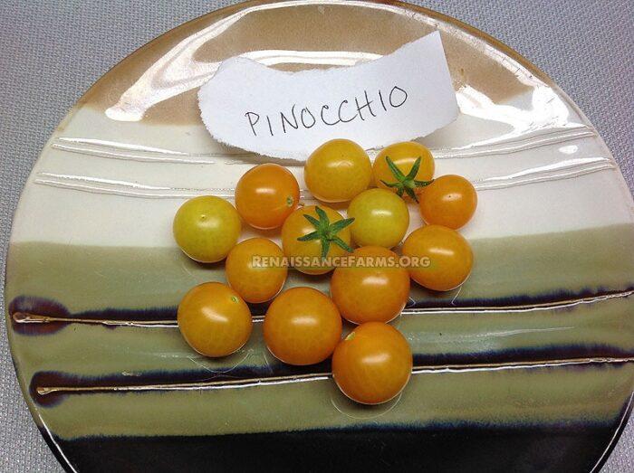 Micro Dwarf Pinocchio Tomato Label