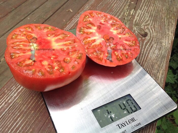 Mother's-Love-Tomato-Seeds