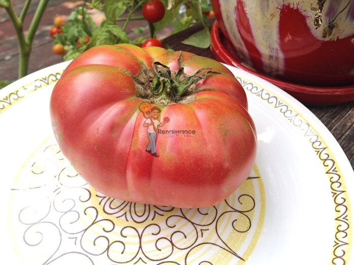 Mother's_Love_Tomato