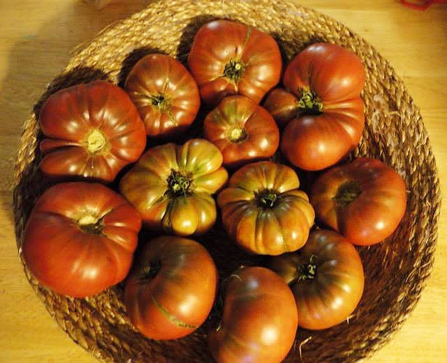 Rosella Purple Dwarf Tomatoes