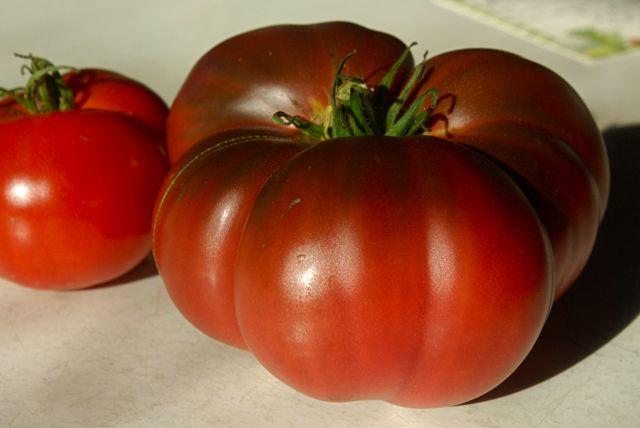 Rosella purple tomato Picture
