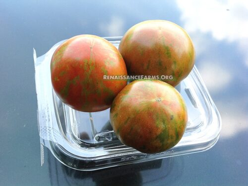 Sarandipity Dwarf Tomato