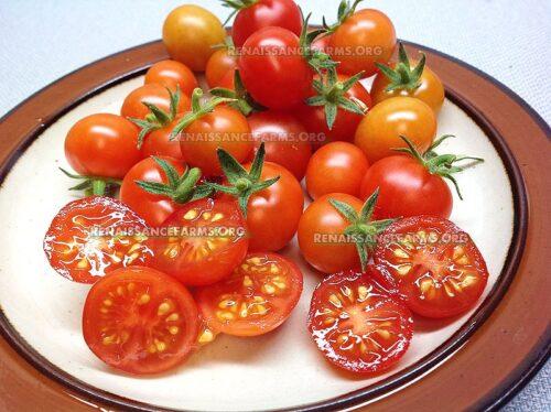 Vilma Micro Dwarf Tomato