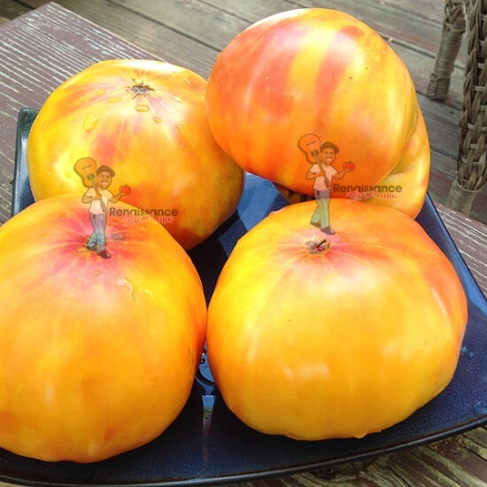 Tuxhorn's Red And Yellow Tomato
