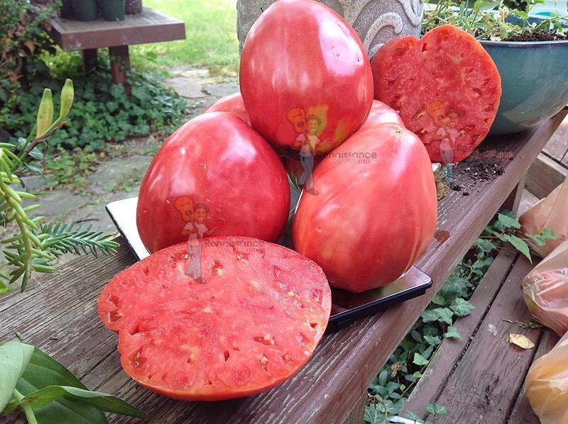 Upstate Oxheart Tomato