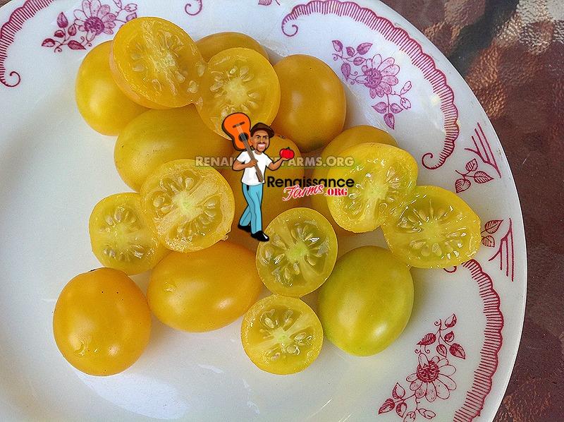 Yellow-Plum-Tomato-Pictures-2018
