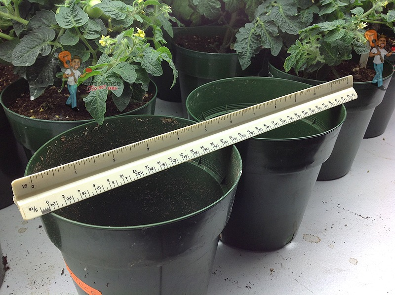 Micro Dwarf Tomato Containers