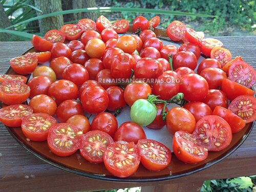 Chisai Cherry Tomato Seeds