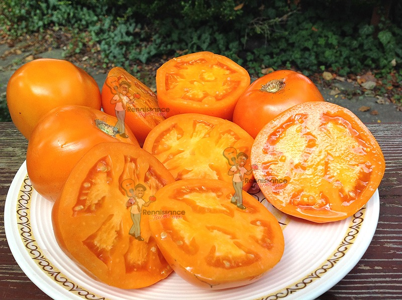 Dad's Sunset Tomato