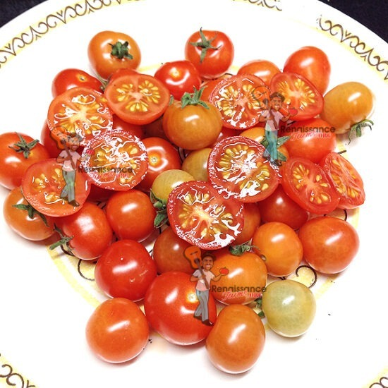 Pinocchio Red Micro Dwarf Tomato