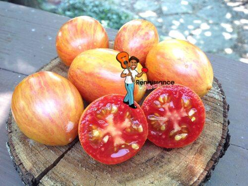 Taste Open Pollinated Tomato