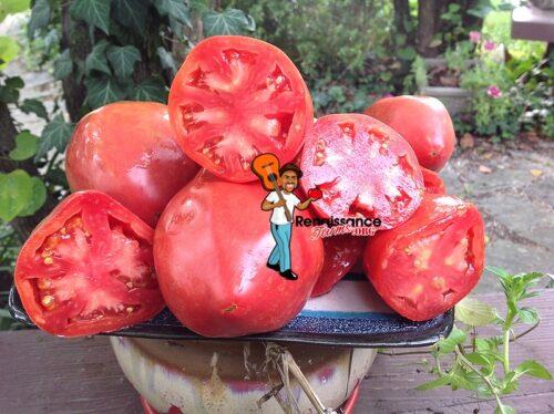 African Vining Tomato 2018