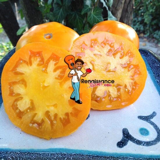 Altai Orange Tomato 2018