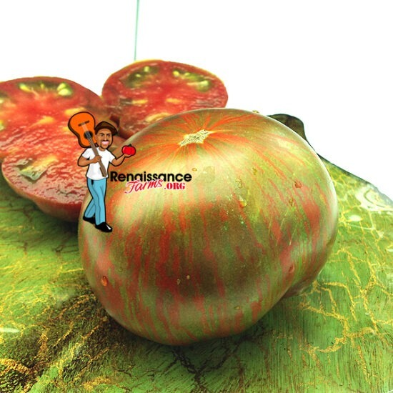 Andy's-Forty-Dwarf-Tomato