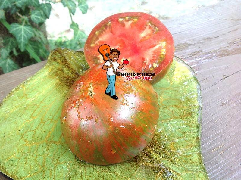 Andy's Forty Dwarf Tomato Image