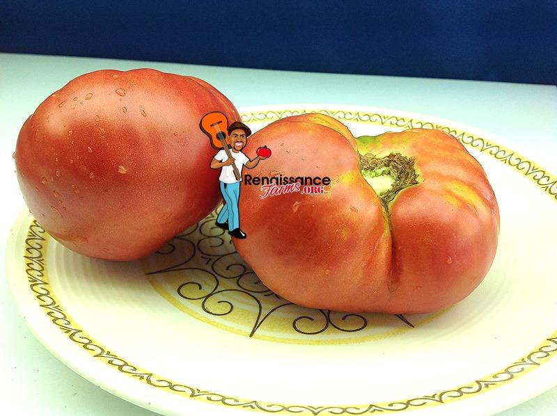 Anna's Kentucky Tomato Image