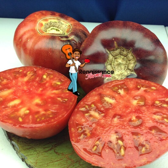 Aurora Blue Tomato