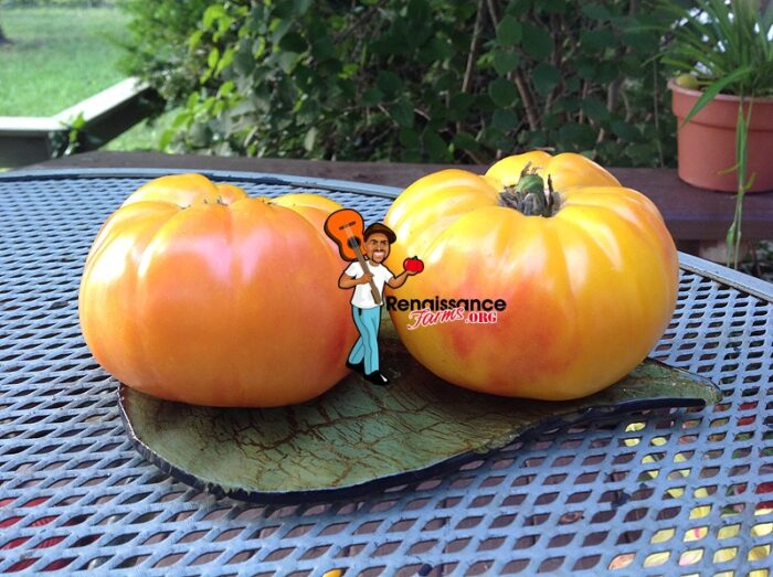 Awesome Dwarf Tomato