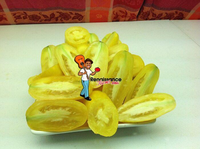 Banana Legs Tomato 2019