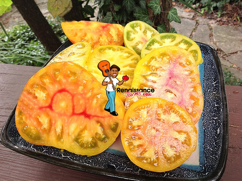 Beauty King Tomato 2018