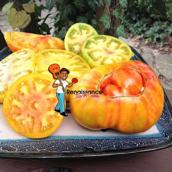 Beauty King Tomato Image