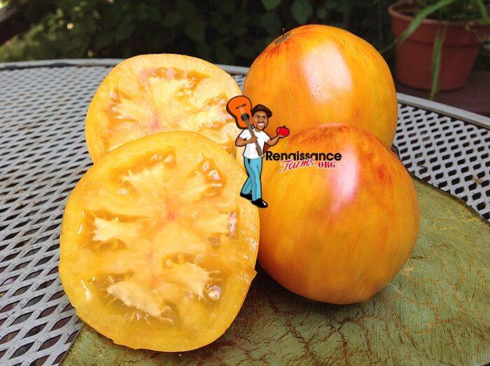 Beauty Queen Heart Tomato 2019